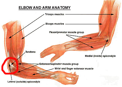 Case Study: Elbow and Biceps Pain After a Fall - The ...